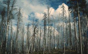 Plantarea copacilor, noul trend